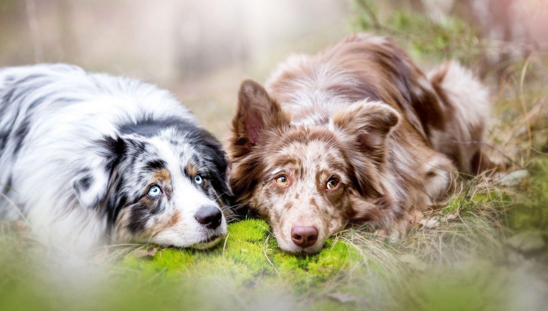 Coprofagia Nel Cane Perchè Il Cane Mangia I Suoi Escrementi E Come